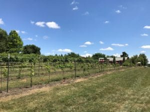 Somerset Winery in Paola