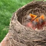 A bird nest inside a chimney is flammable and can start a house fire!