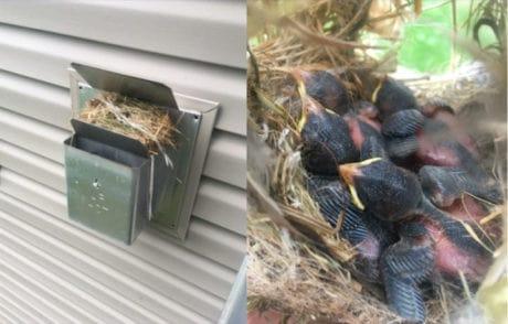 birds-nesting-direct-vent-fireplace