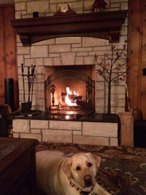 Dogs sits next to a Burning Fire in Fireplace