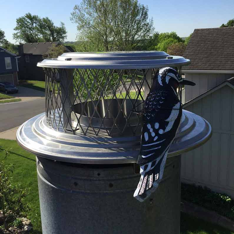 Chimney Cap Stops Animal Entry such as birds