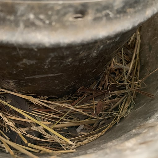 debris from bird nesting in chimney