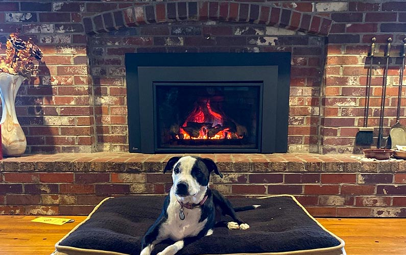 Dog enjoys fireplace in Lees Summit