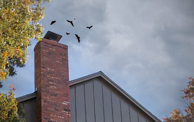 Got Bats in Your Chimney Flue?
